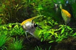 How to Choose the Best Freshwater Fish for your Aquarium
