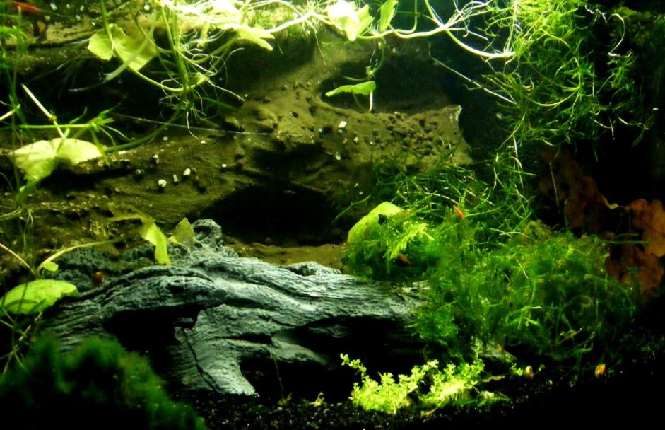 How Do I Grow My Aquairum Fish Fast and Quickly?