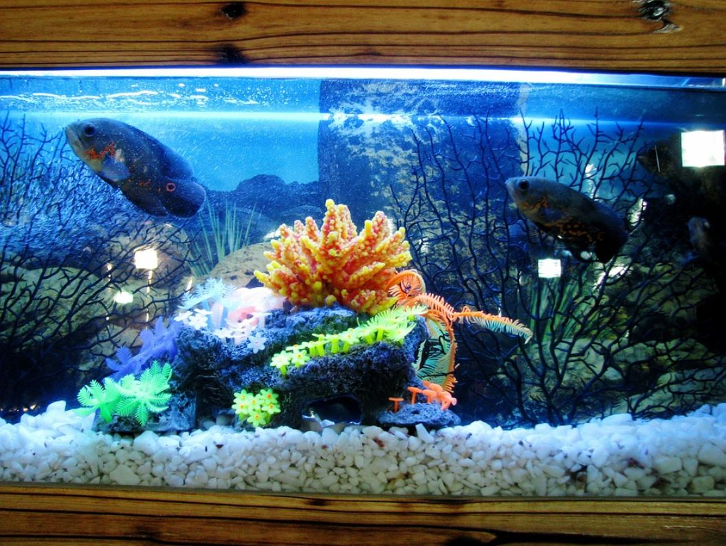 Aquarium Fish Medication: Risks, Costs, Alternatives